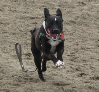 Oscar on beach